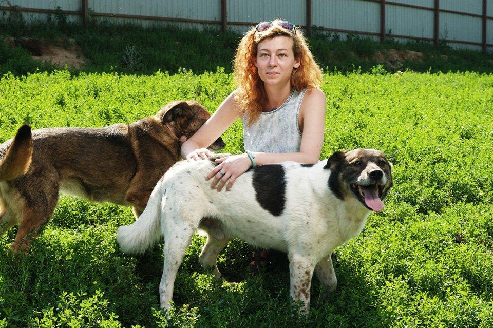 Как помочь бездомным собакам найти дом. Изображение № 2.
