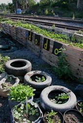 Guerrilla Gardening. Изображение № 7.