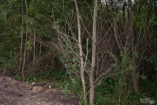 Дом на дереве: Жители Лахты за месяц до строительства небоскреба. Изображение № 23.