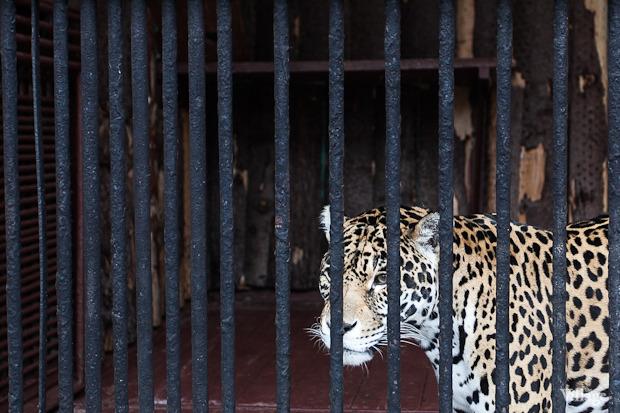 Как живёт и меняется Ленинградский зоопарк . Изображение № 33.
