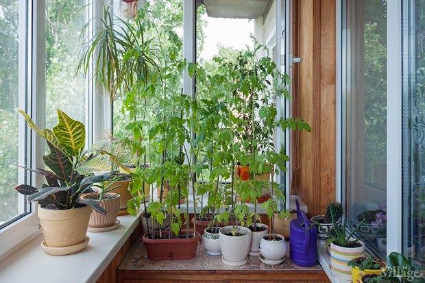 Сделай сад: Что киевляне выращивают у себя на балконах. Зображення № 11.