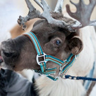 Гид по новогодним ярмаркам 2012. Изображение № 9.
