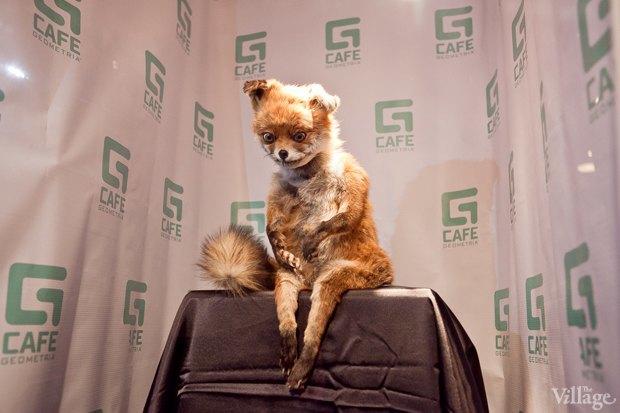 «Упоротого лиса» покажут в музее эротики и в музее СССР. Изображение № 1.