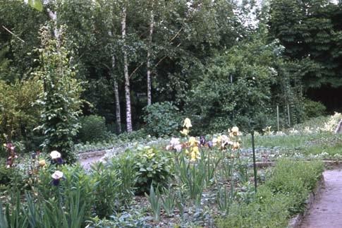 Сад Травникова в 60-е годы. Изображение № 5.