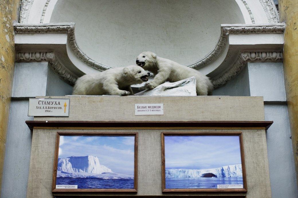 «Переезд невозможен»: Бывший директор музея Арктики иАнтарктики— оРПЦ ибелых медведях. Изображение № 6.