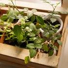 Где посадки: Что горожане выращивают на балконах иподоконниках. Изображение №31.