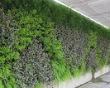 На московских крышах предлагают разбить сады. Изображение № 6.