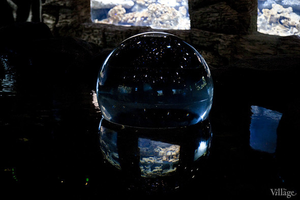 Первый океанариум открылся в Москве. Изображение № 17.