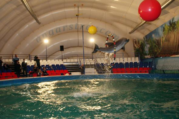 На ВВЦ открылся дельфинарий. Изображение № 6.
