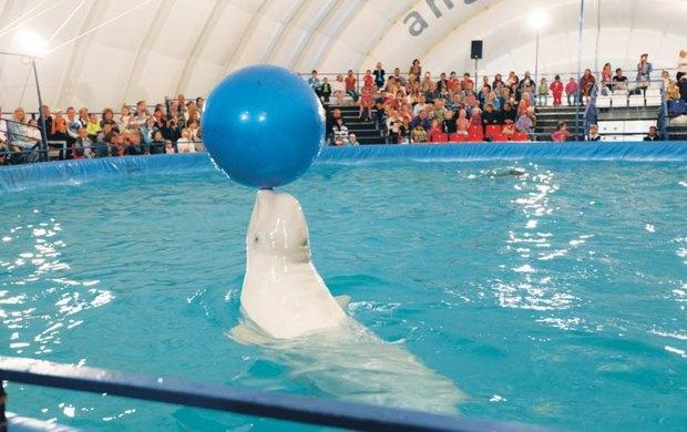 В Петербурге даст представления гастролирующий шатёр-дельфинарий. Изображение № 3.