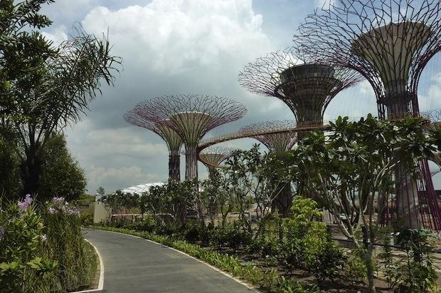 Дизайн от природы: Дом-лотос и супердеревья в Сингапуре. Изображение № 29.