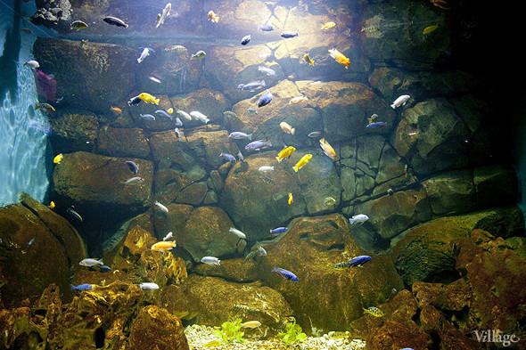 Первый океанариум открылся в Москве. Изображение № 12.