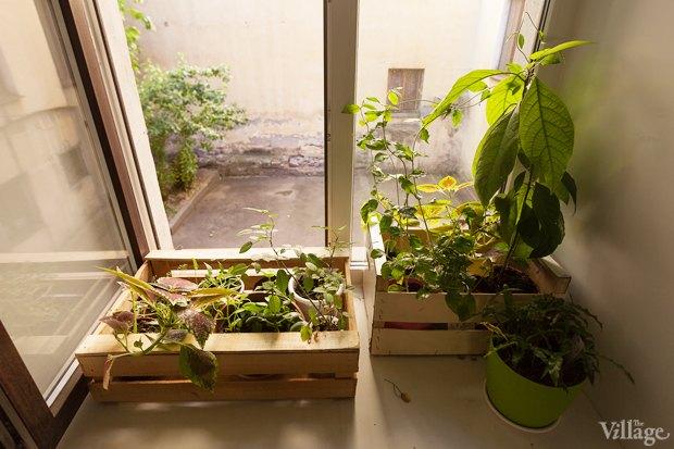 Где посадки: Что горожане выращивают на балконах иподоконниках. Изображение № 20.