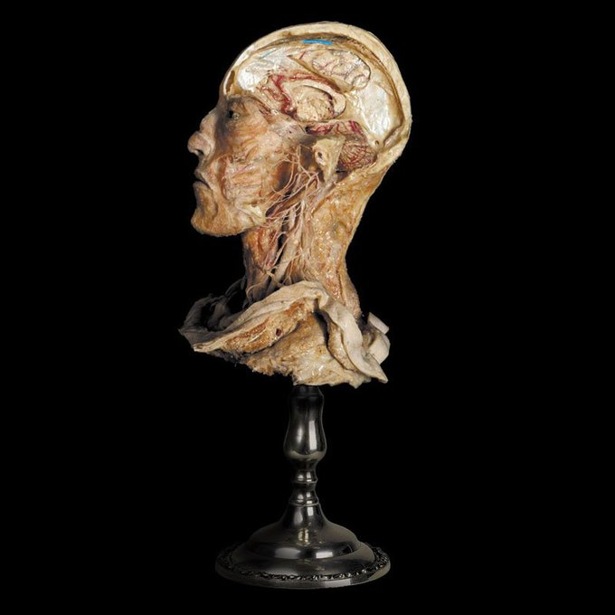 На Конюшенной площади покажут анатомию человека. Изображение № 4.