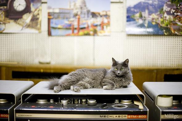 Радио Follow Me займётся музыкой в парке Горького. Изображение № 11.