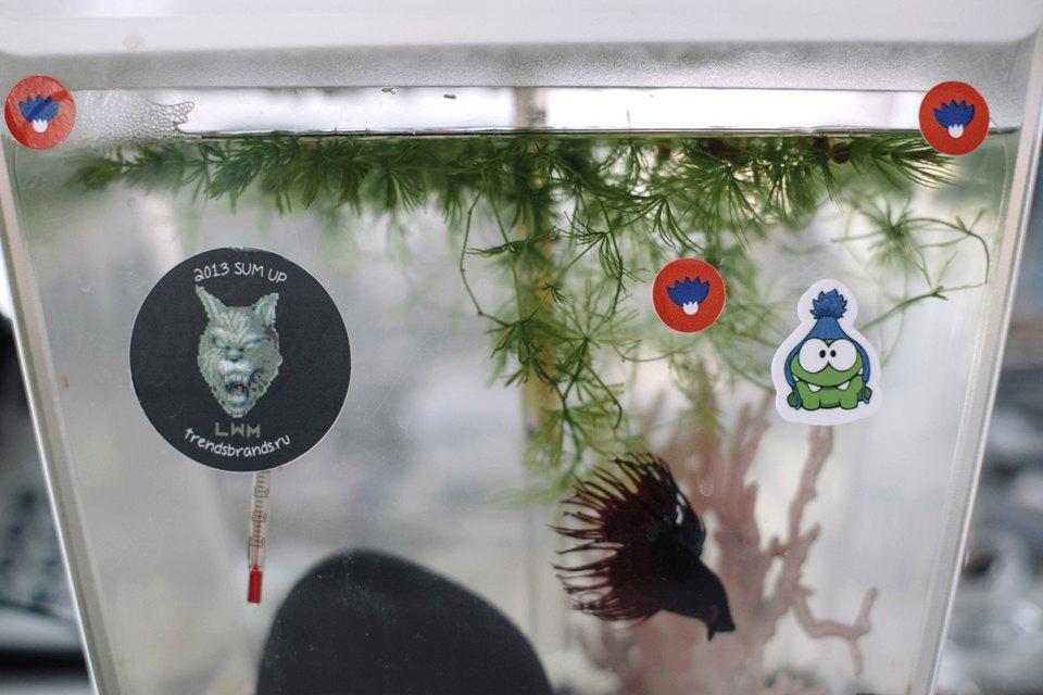 Удав Зина, кот Старки, рыба Крупская и другие животные в офисах. Изображение № 4.