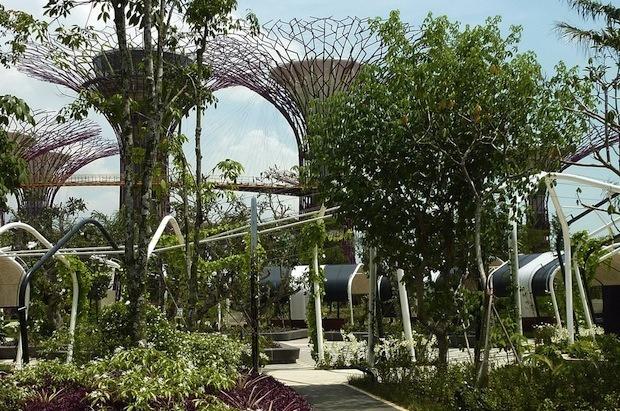 Дизайн от природы: Дом-лотос и супердеревья в Сингапуре. Изображение № 28.