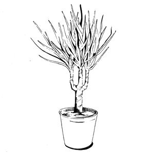 Гид The Village: Комнатные растения. Изображение № 35.