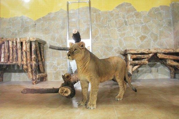 Итоги недели: Реставрация Ропшинского дворца, обновление вольеров в Зоопарке и читальный зал в ЦПКиО. Изображение № 5.