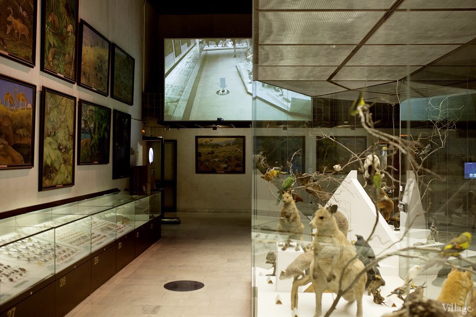 Перемены в Дарвиновском музее: «Можно бегать, прыгать и шуметь». Изображение № 16.