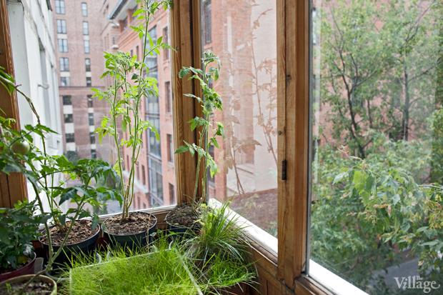 Где посадки: Что москвичи выращивают на балконе. Изображение №15.