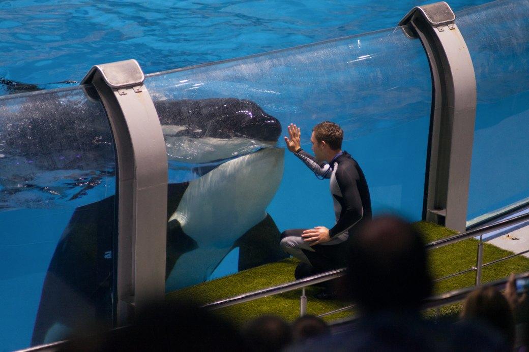 «Главные здесь — косатки, но самые милые — моржи»: На ВДНХ открылся океанариум. Изображение № 19.