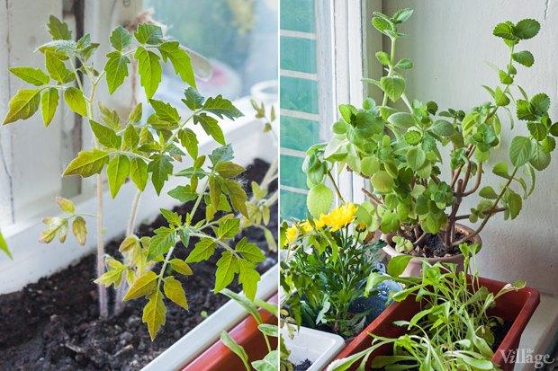 Сделай сад: Что киевляне выращивают у себя на балконах. Зображення № 35.