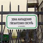 В Москве появились партизанские дорожные знаки. Изображение №14.