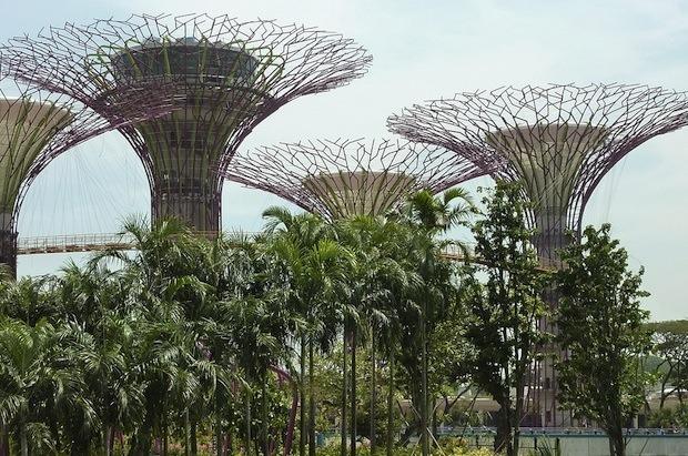 Дизайн от природы: Дом-лотос и супердеревья в Сингапуре. Изображение № 26.