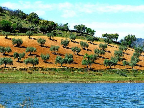 Изображение 14. Португалия - Что делать на краю старого света?.. Изображение № 14.