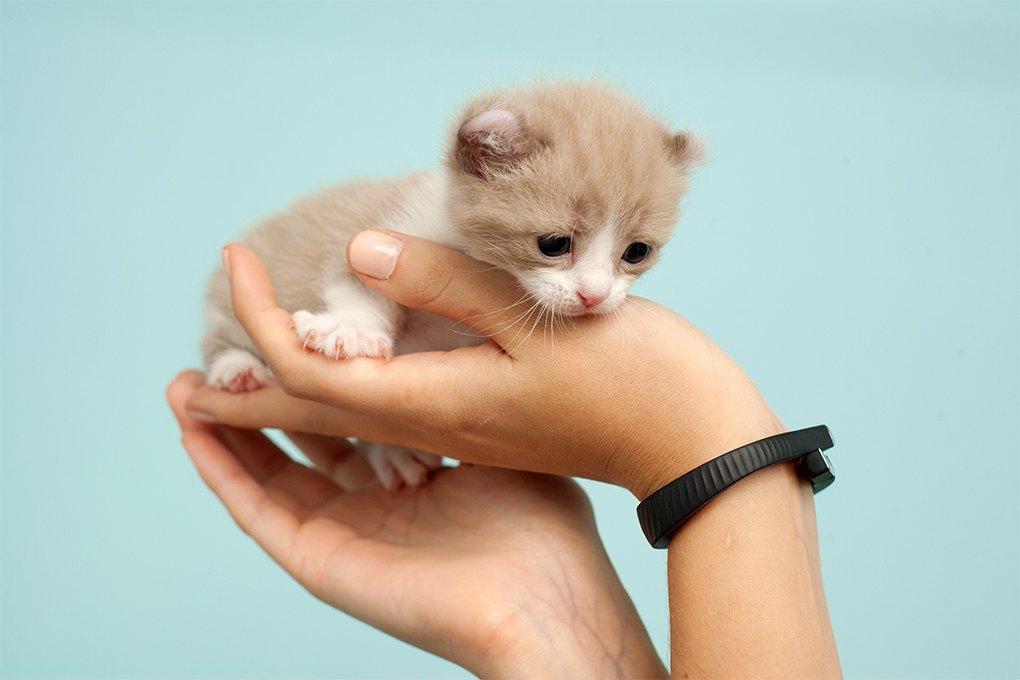 «Мурмулет»: Как заработать на котятах за полмиллиона рублей. Изображение № 1.