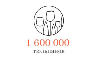Цифра дня: 1,6 миллиона тюльпанов посадят в городе. Изображение № 1.