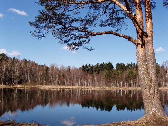 озеро Черное (г. Зеленоград), zlngrd.ru. Изображение № 3.