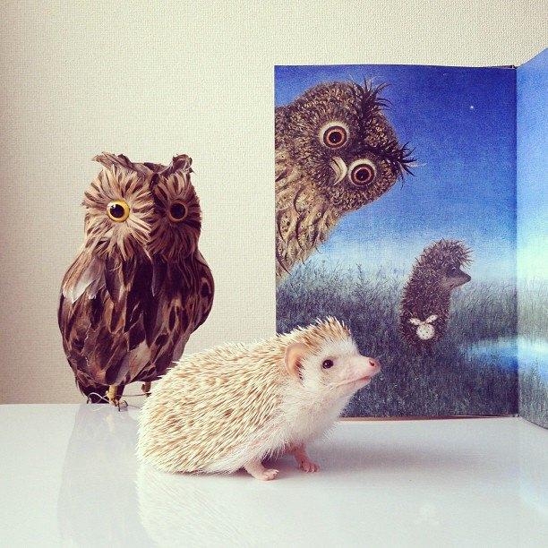 Лучшие страницы Instagram с животными: Часть 1. Изображение № 1.