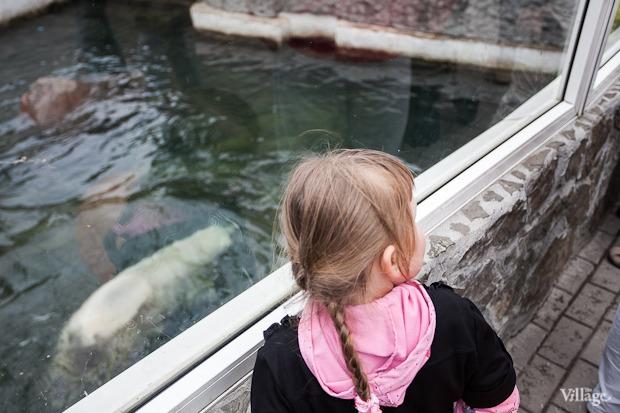 Как живёт и меняется Ленинградский зоопарк . Изображение № 29.