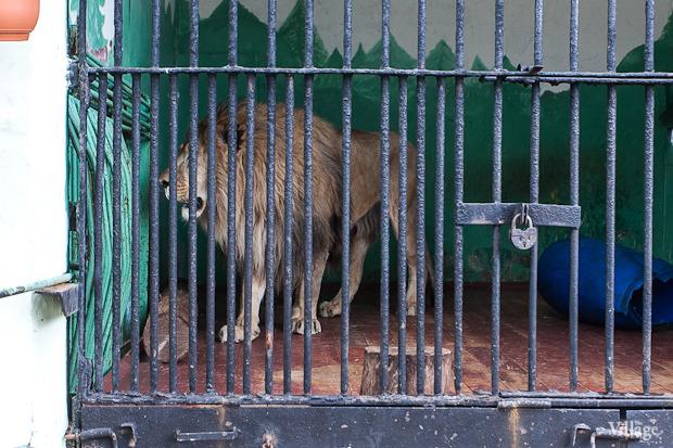 Как живёт и меняется Ленинградский зоопарк . Изображение № 42.