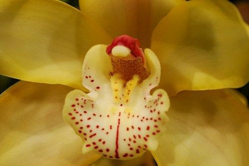 В «Аптекарском огороде» открывается фестиваль орхидей. Изображение № 2.