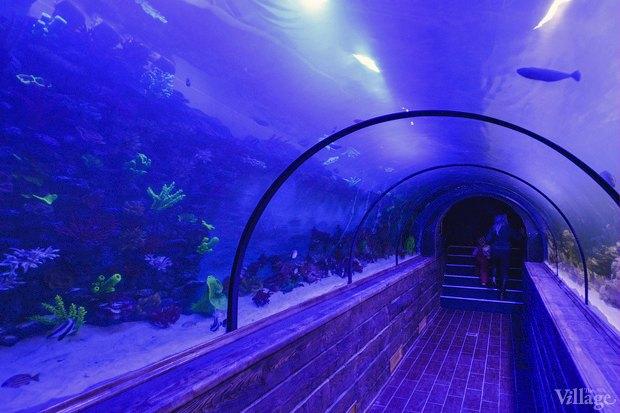 В «Детском мире» начал работать океанариум. Изображение № 2.