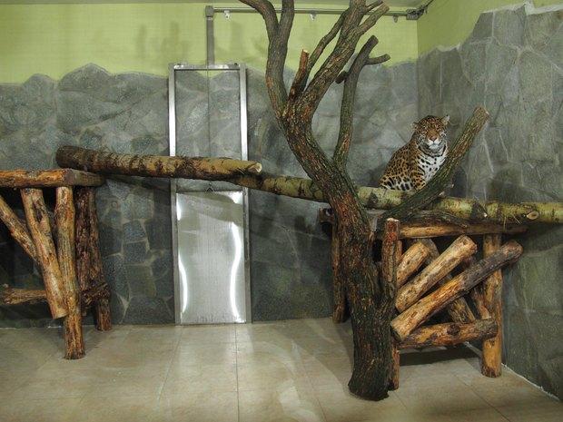 В Ленинградском зоопарке клетки заменяют стеклянными вольерами. Изображение № 4.