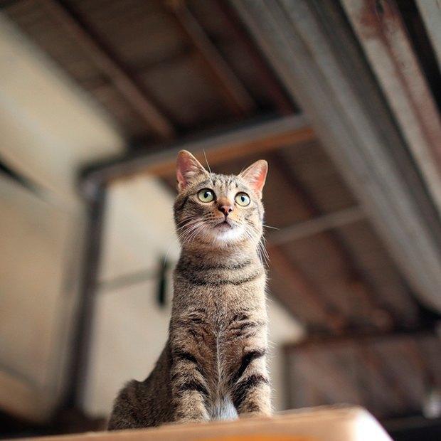 Марина Абрамович в «Гараже», выставка бездомных кошек, фестиваль аниме и ещё 12 событий. Изображение № 10.