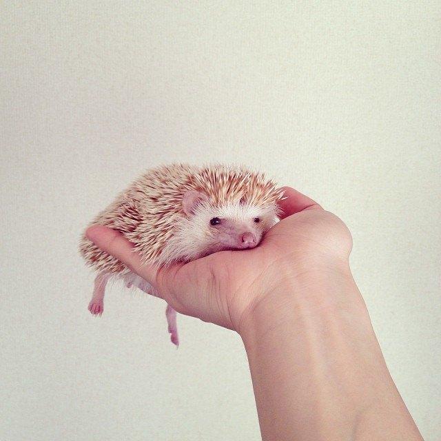 Лучшие страницы Instagram с животными: Часть 1. Изображение № 2.