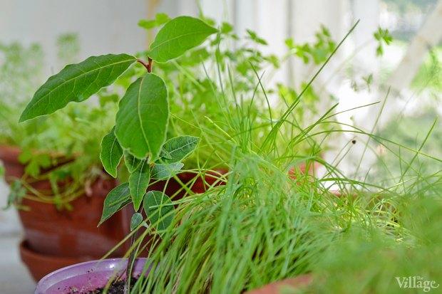 Сделай сад: Что киевляне выращивают у себя на балконах. Зображення № 24.