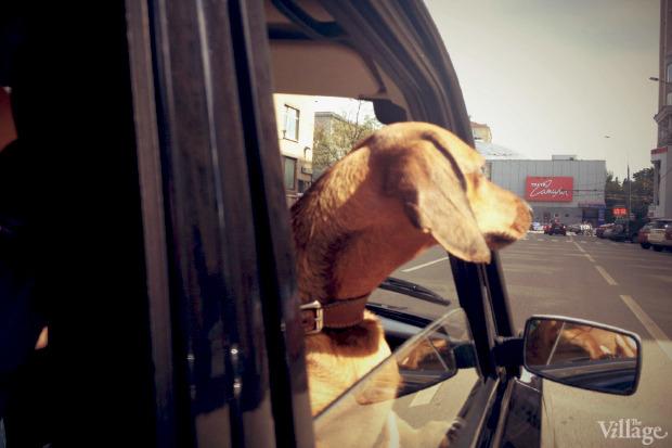 Эксперимент The Village: Куда пускают с собакой?. Изображение № 1.