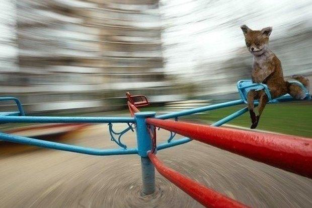 Упоротого лиса выставят в Петербурге. Изображение № 3.