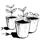 Гид The Village: Комнатные растения. Изображение № 14.