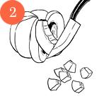 Рецепты шефов: Пенне ригате с мидиями и тыквой. Изображение №5.