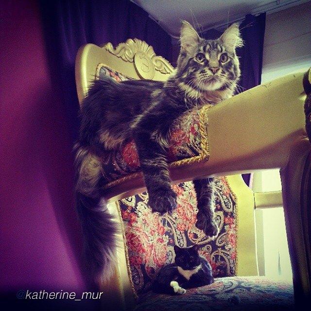 Музейные коты вснимках Instagram. Изображение № 7.