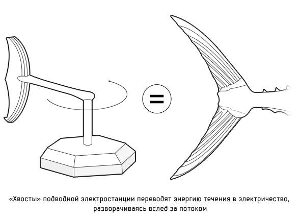 Дизайн от природы: Ресторан-кокон и «тунцовая» электростанция . Изображение №18.