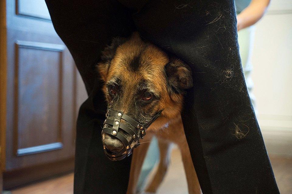 Всё не как улюдей: Какработает ветеринарная неотложка. Изображение № 8.