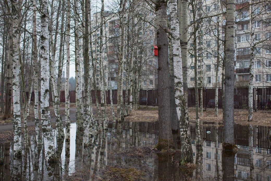 В Светогорске. Изображение № 8.